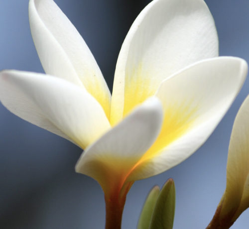 Toute l'équipe d'Eden Paradise Spa Ecolodge, vous offre ses meilleurs voeux de réussite et prospérité pour cette nouvelle année…